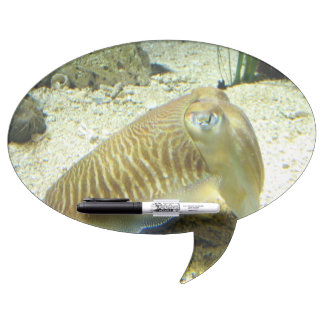 Cuttlefish Dry-Erase Whiteboard