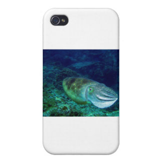 cuttlefish iPhone 4 cover