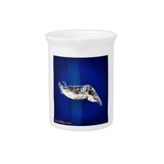 Cuttlefish Pitchers