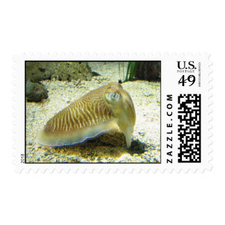 Cuttlefish Stamps