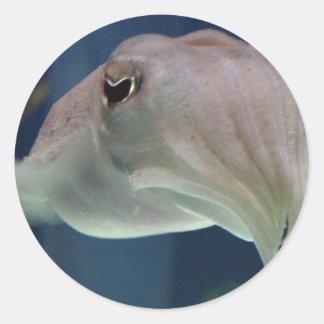 Cuttlefish stickers