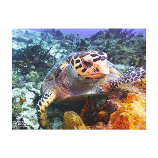 Cuzumel Turtle #4 Canvas Print