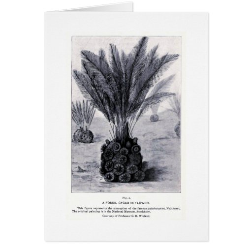 Cycad fósil en tarjeta del arte de la flor