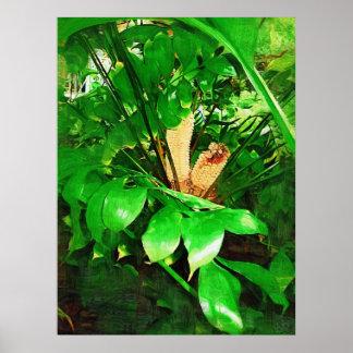 Cycads collection , fairchild tropical garden, mia poster