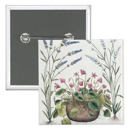 Cyclamen and Lavender: 1.Cyclamen Romanum; 2.Spica Buttons