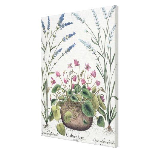 Cyclamen and Lavender: 1.Cyclamen Romanum; 2.Spica Canvas Print