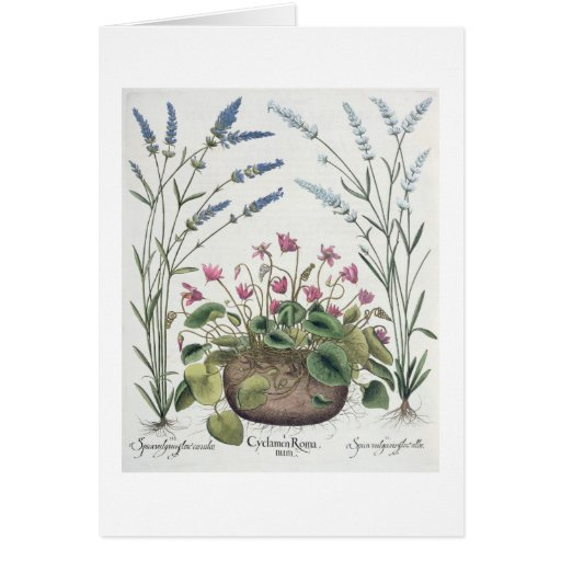 Cyclamen and Lavender: 1.Cyclamen Romanum; 2.Spica Greeting Cards