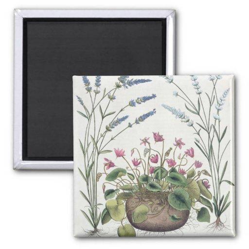 Cyclamen and Lavender: 1.Cyclamen Romanum; 2.Spica Refrigerator Magnet
