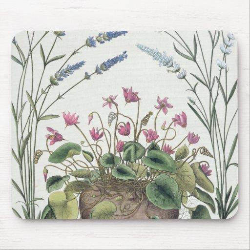 Cyclamen and Lavender: 1.Cyclamen Romanum; 2.Spica Mouse Pads