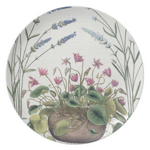 Cyclamen and Lavender: 1.Cyclamen Romanum; 2.Spica Party Plates