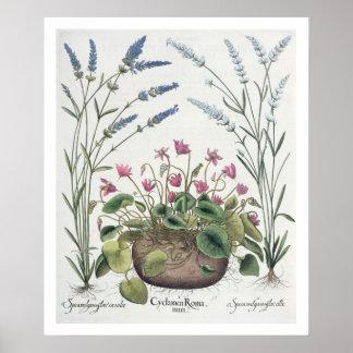 Cyclamen and Lavender: 1.Cyclamen Romanum; 2.Spica Poster