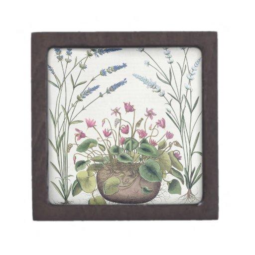 Cyclamen and Lavender: 1.Cyclamen Romanum; 2.Spica Premium Gift Boxes