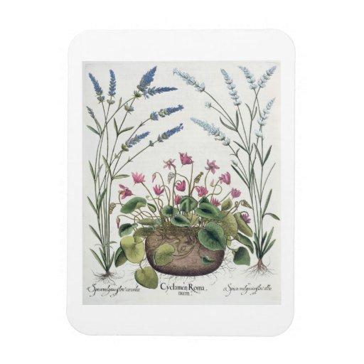 Cyclamen and Lavender: 1.Cyclamen Romanum; 2.Spica Rectangle Magnet