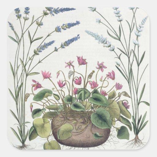 Cyclamen and Lavender: 1.Cyclamen Romanum; 2.Spica Square Stickers