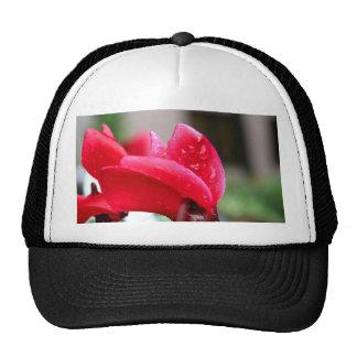 Cyclamen hat