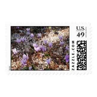 Cyclamen Postage Stamp