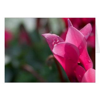 Cyclamen rosado tarjeta de felicitación