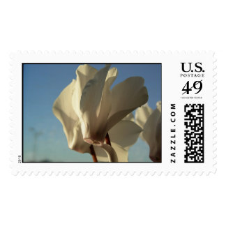 Cyclamen Stamps