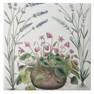 Cyclamen y lavanda: 1.Cyclamen Romanum; 2.Spica Azulejo Cuadrado Grande