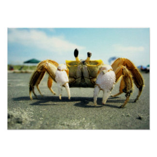 Cyclops Crabby Poster