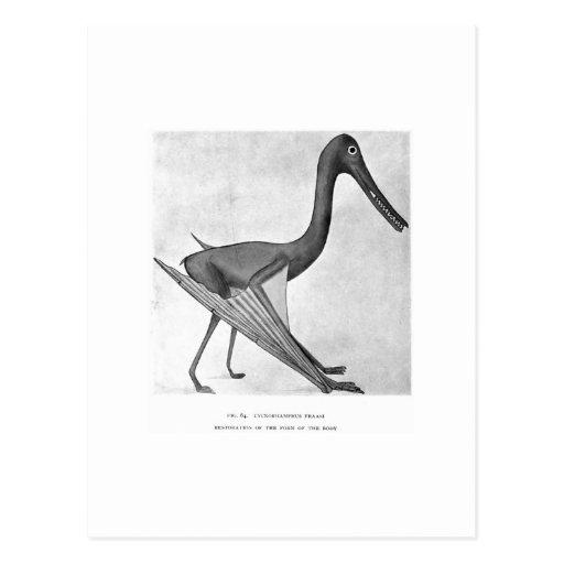 Cycnorhampus fraasi art postcard