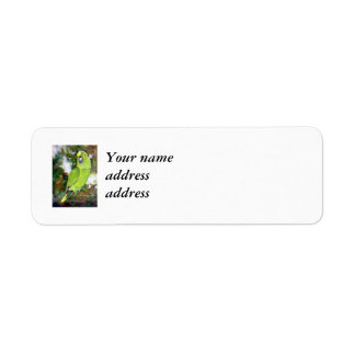 Cydney Yellow Naped Parrot Labels