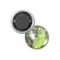 Cydney Yellow Naped Parrot Magnet