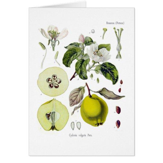 Cydonia vulgaris (Quince) Card