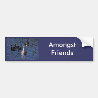 Cygnet and Geese Car Bumper Sticker