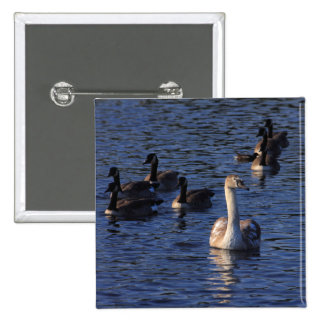 Cygnet and Geese Pinback Button