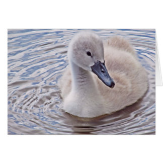 Cygnet Mute Swan Card