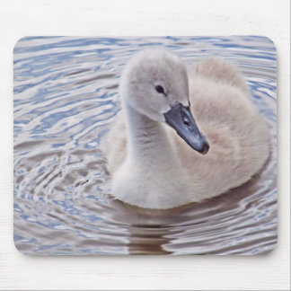 Cygnet Mute Swan Mouse Pad