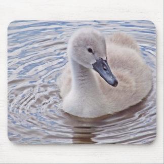 Cygnet Mute Swan Mouse Pad