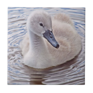 Cygnet Mute Swan Tiles