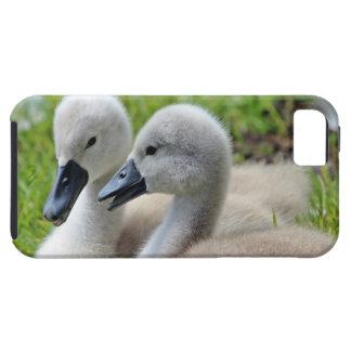 Cygnet Siblings iPhone SE/5/5s Case