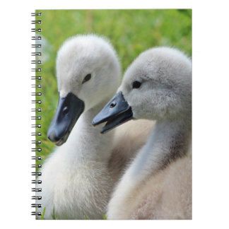 Cygnet Siblings Spiral Note Book