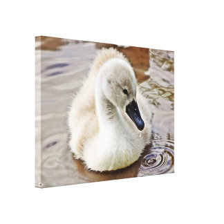 Cygnet Water Drop Canvas Print