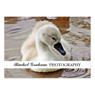 Cygnet - Wildlife Photography Large Business Cards (Pack Of 100)