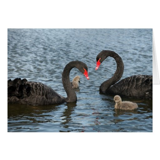 Cygnets on the moat of Markenfield Hall, Ripon, UK Greeting Card