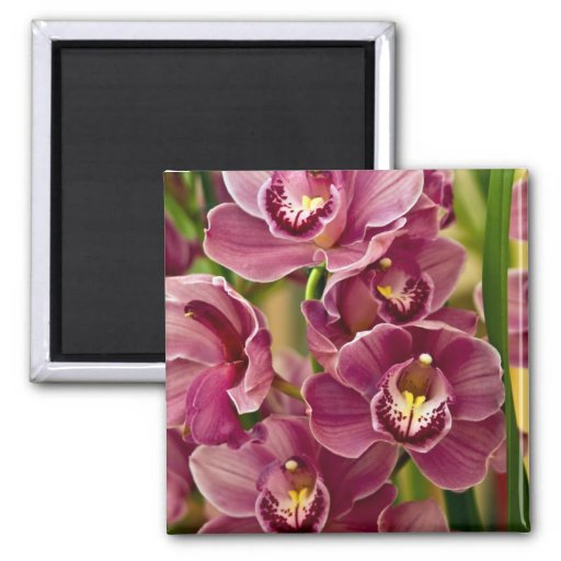 Cymbidium Orchid 2 Inch Square Magnet