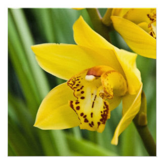 Cymbidium Orchid  Card / Invitation