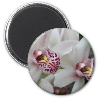 Cymbidium Orchid Magnet