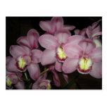 Cymbidium Orchid Post Cards