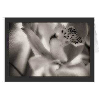 Cymbidium Orchid, Sepiatone, Occasions Card