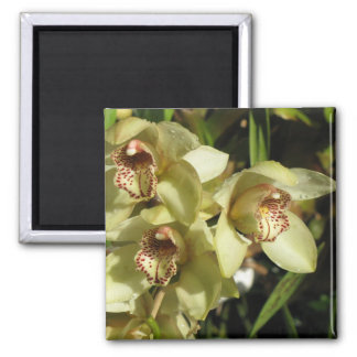 Cymbidium Orchids magnet