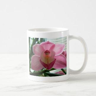 cymbidium rosado taza básica blanca