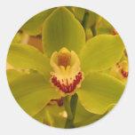 Cymbidium verde de la orquídea pegatina redonda