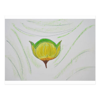 Cymbopogon poppy.jpg tarjetas postales