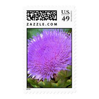 Cynara cardunculus (syn. Cynara scolymus L.) Globe Stamps