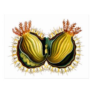 Cynthia melocactus, Ernst Haeckel Fine Vintage Postcards